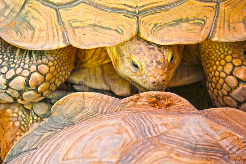 Closeup view of tortoise stock photography
