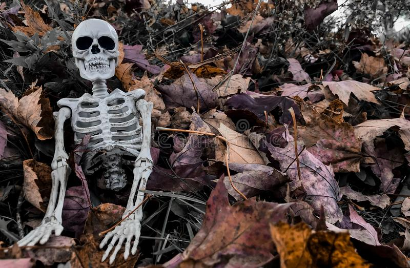 Halloween Skeleton in Fall Leaves Left stock images