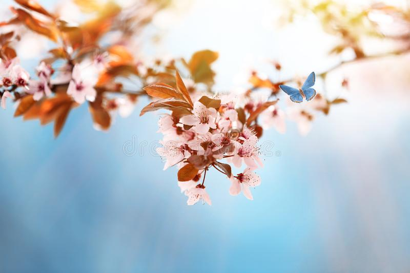 Closeup view of tree branches with tiny flowers outdoors. Amazing spring blossom. Closeup view of tree branches with tiny flowers outdoors, space for text stock photography