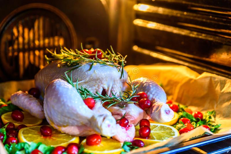 Closeup view of Whole Raw Chicken with Fresh parsley Cranberries and Orange Slices on baking tray tin prepared for roasting in ove. N stock photography