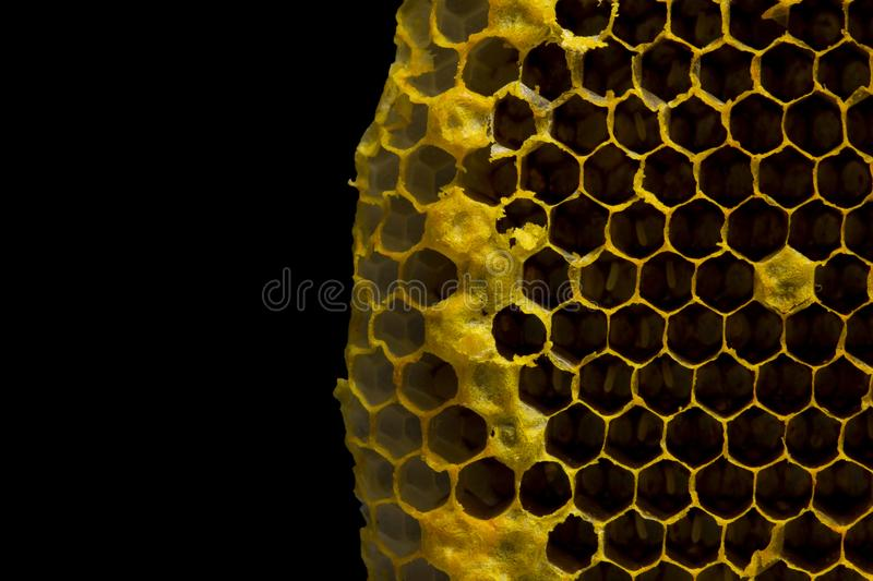 Closeup view of the working bees on honeycomb, Honey cells pattern isolated on black background. royalty free stock images