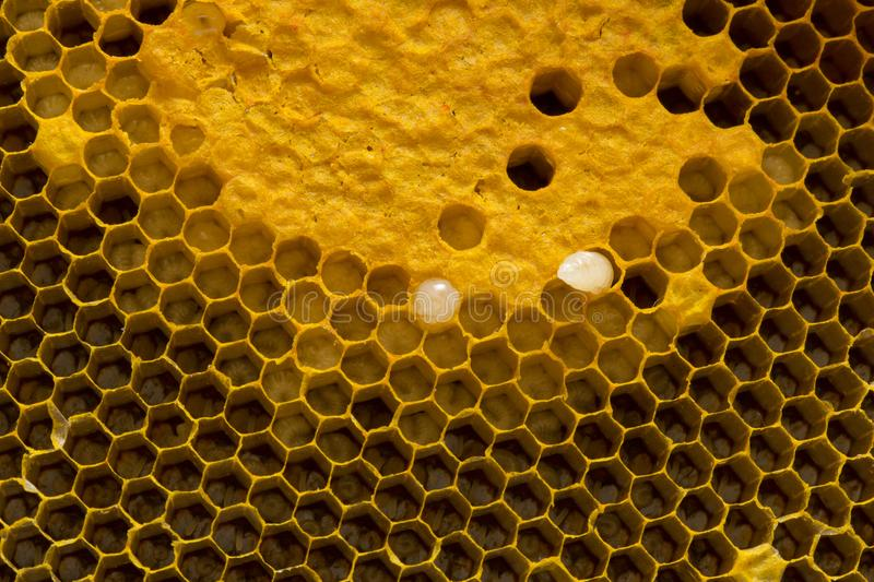 Closeup view of the working bees on honeycomb, Honey cells pattern, BeekeepingHoneycomb texture. Closeup view of the working bees on honeycomb, Honey cells stock images