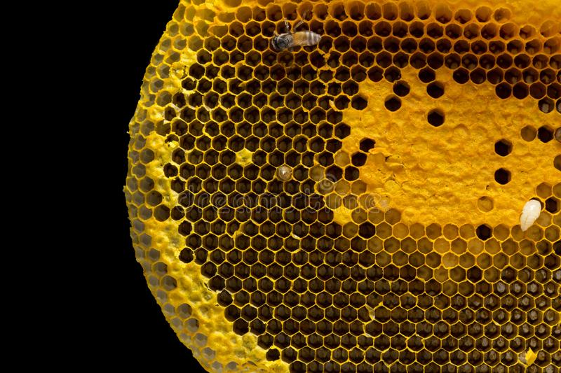 Closeup view of the working bees on honeycomb, Honey cells pattern, BeekeepingHoneycomb texture. stock images