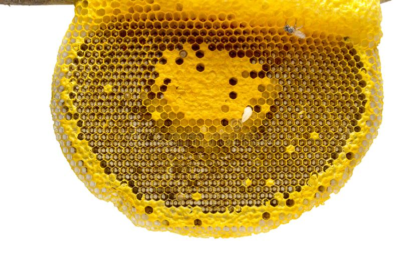 Closeup view of the working bees on honeycomb, Honey cells pattern, Beekeeping Honeycomb texture. royalty free stock image