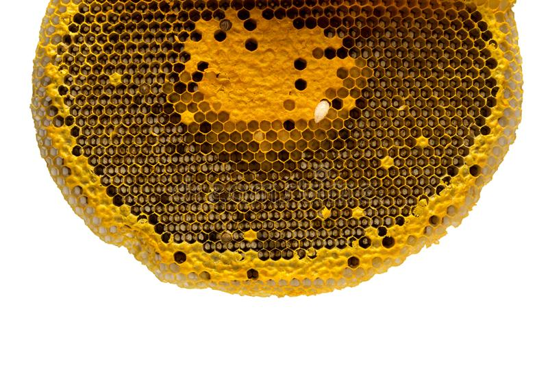 Closeup view of the working bees on honeycomb, Honey cells pattern, Beekeeping Honeycomb texture. royalty free stock images