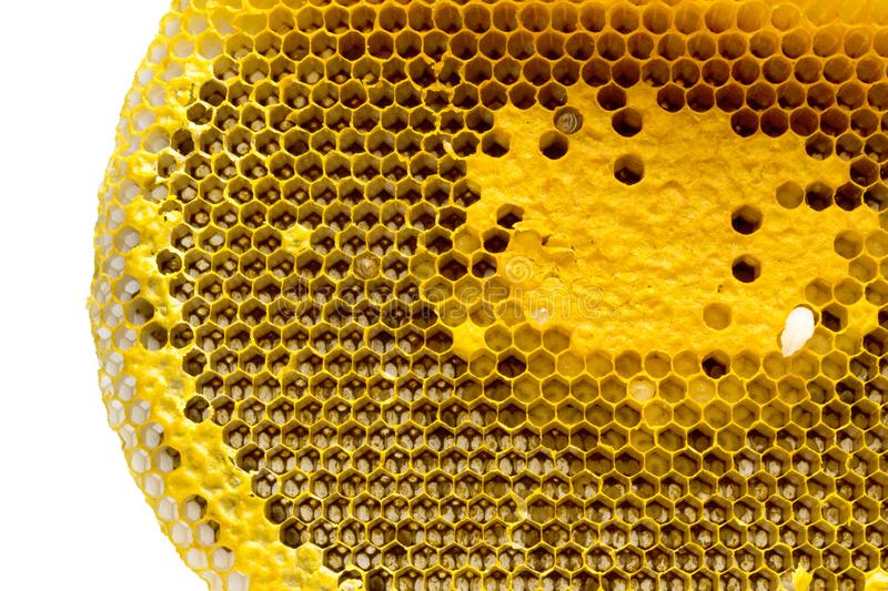 Closeup view of the working bees on honeycomb, Honey cells pattern, Beekeeping Honeycomb texture. stock image