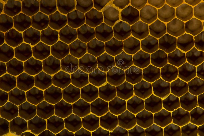 Closeup view of the working bees on honeycomb, Honey cells pattern, BeekeepingHoneycomb texture. stock photos
