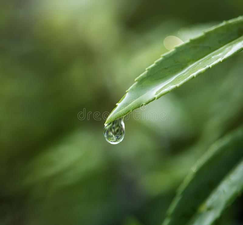 Closeup of water drop on leafs royalty free stock image
