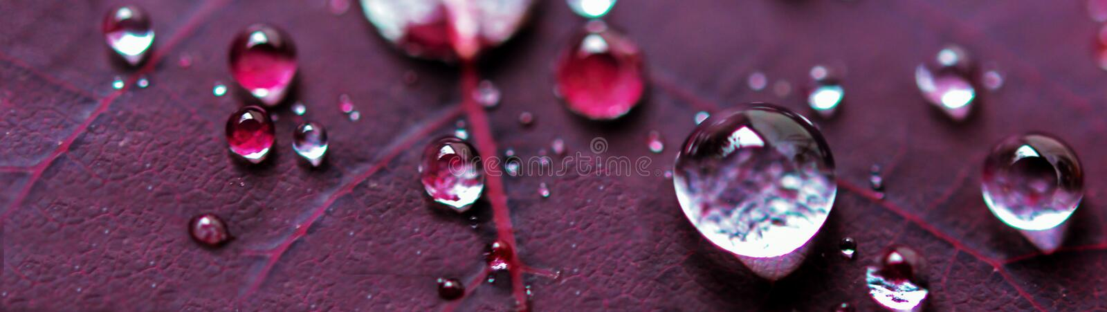 Micro Water Drops on Purple Plant Leaf royalty free stock images