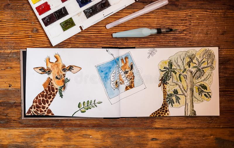 Closeup of watercolor giraffe, eating leaves from acacia tree, drawn in sketchbook. stock photography