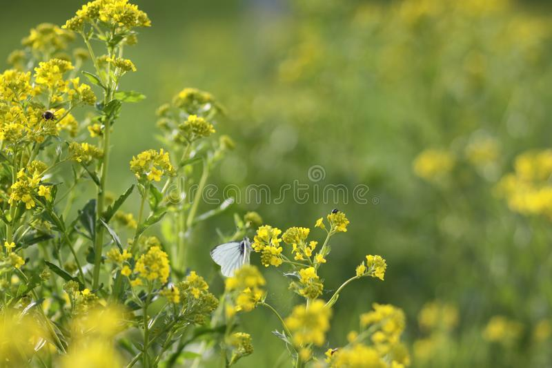 Nature in spring stock photography
