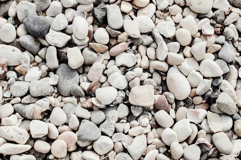 Closeup of white and gray pebble stones and sea shells on beach. Ocean, seashore natural textured background. Summer stock image