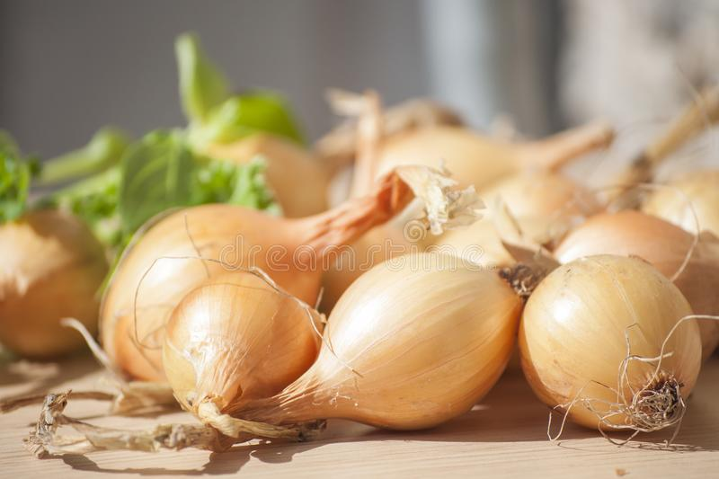Closeup of whole onions on wooden plank in sunlight royalty free stock image