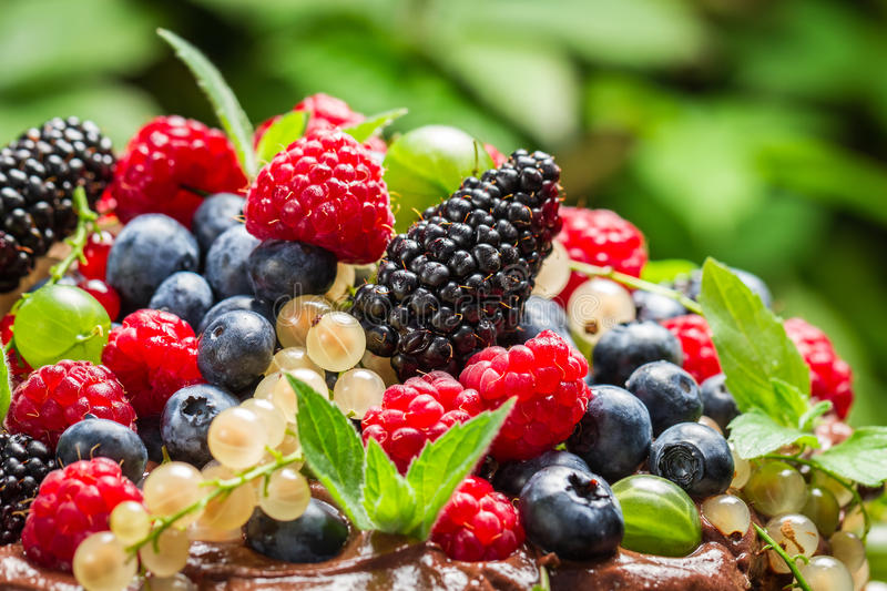 Closeup of wild fresh berry fruits royalty free stock image