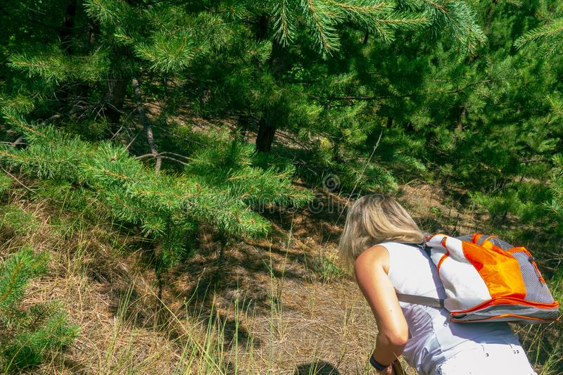 Closeup of woman with backpack in front of fir and pine trees forest. Concept of active lifestyle, hiking and tourism royalty free stock image