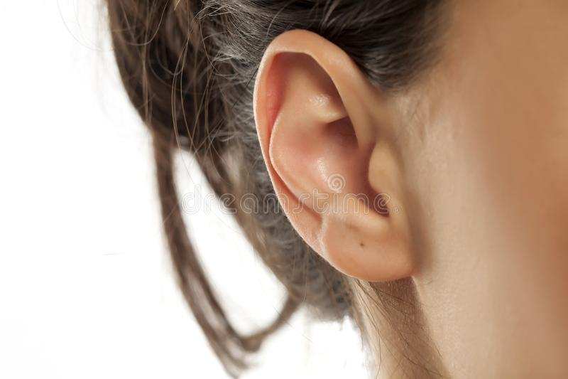 Woman`s ear. Closeup of a woman`s ear on a white background royalty free stock images