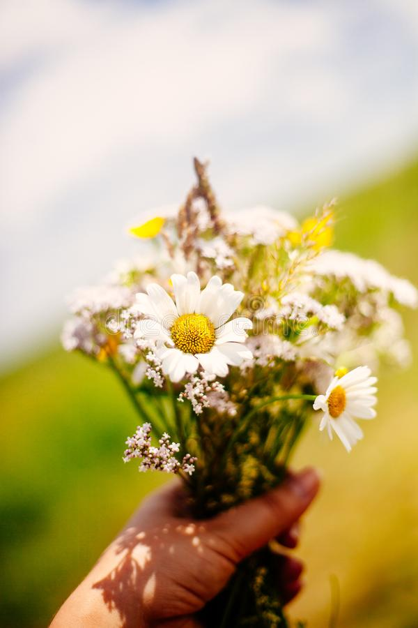 Closeup of woman`s hand holding bunch of summer wild flowers against sky and field background royalty free stock photo