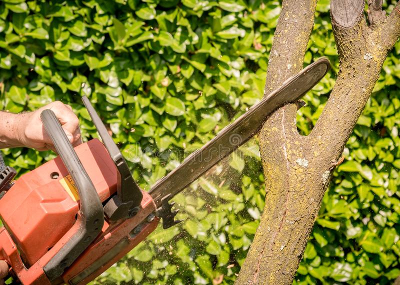 Closeup of woodcutter sawing chainsaw in motion stock image