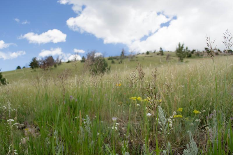 A closeup of Wyoming prairie grasses and flowers. stock photos