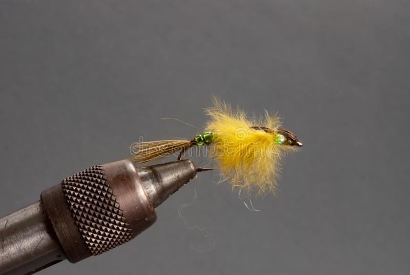 Closeup of a Yellow Caddis Fly. Used for fly fishing in a vice with a neutral gray background stock images