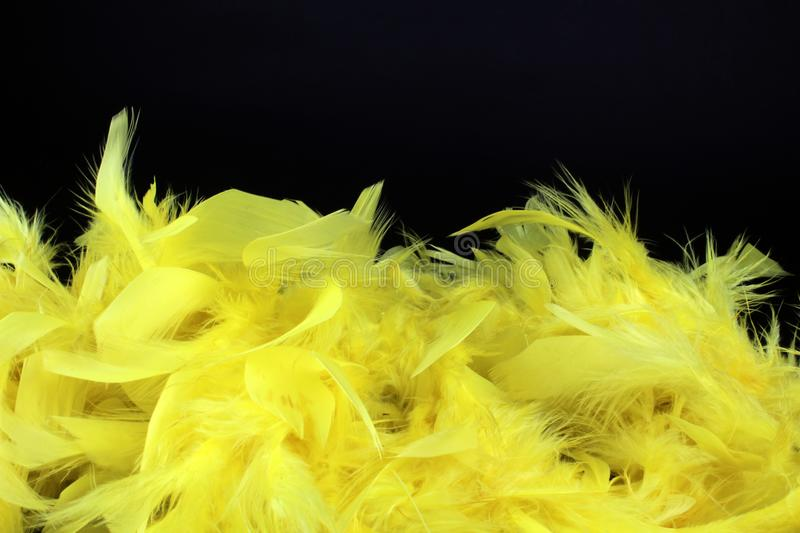 Yellow feathers on black background royalty free stock photography