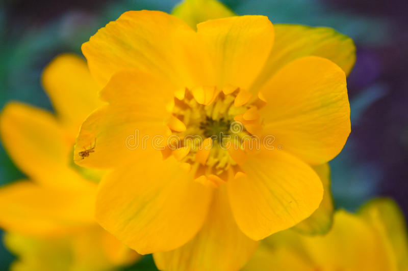Closeup of Yellow Flower stock photography