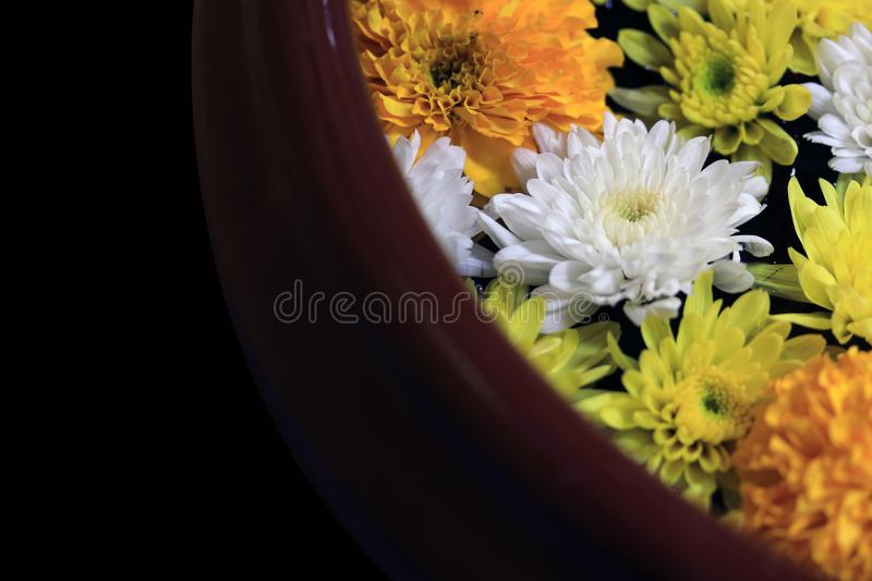 Closeup yellow marigold flower with white and yellow dandelions floating on the water with the edge of pottery water. Closeup yellow marigold flower with white stock images