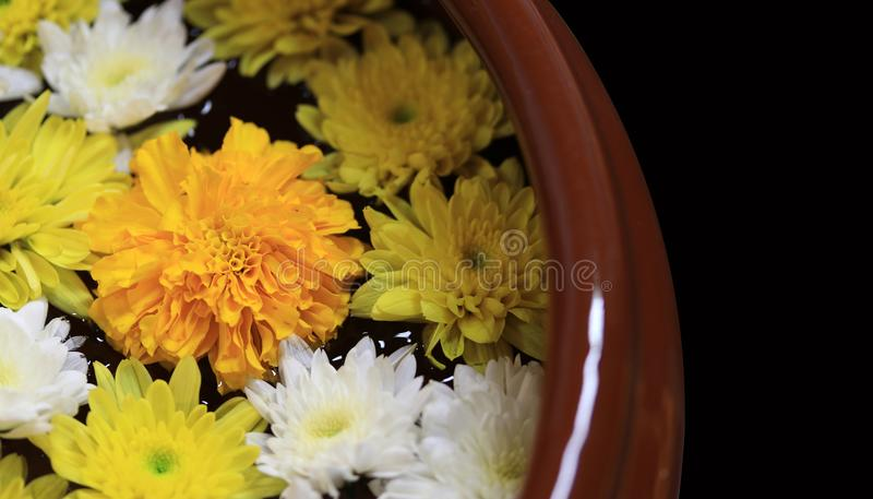 Closeup yellow marigold flower with white and yellow dandelions floating on the water with the edge of pottery water. Closeup yellow marigold flower with white royalty free stock photos