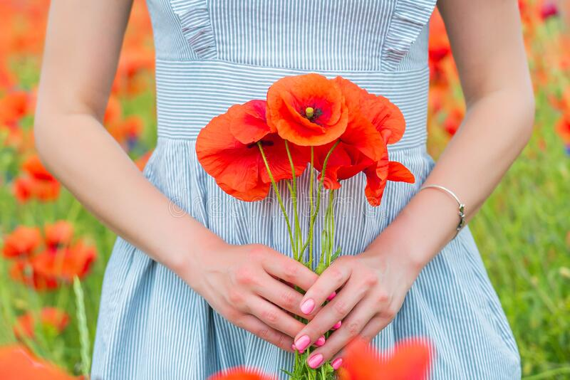 Closeup of young beautiful woman holds a poppy bouquet in her hands in a poppy field on sunny summer day. royalty free stock images