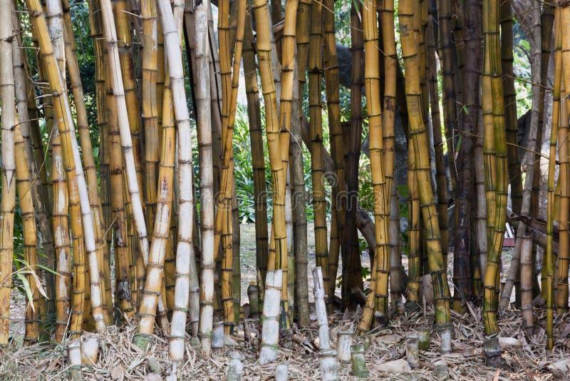 Closeupbakgrund av bambumodeller och texturer fotografering för bildbyråer