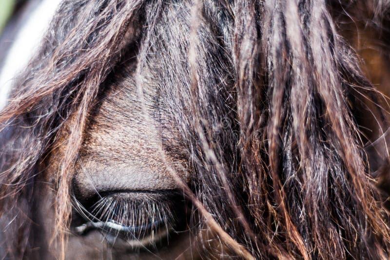 Closeupbild av ögat av hästen Tamdjurbegrepp Makrobilden av hästar synar royaltyfri foto