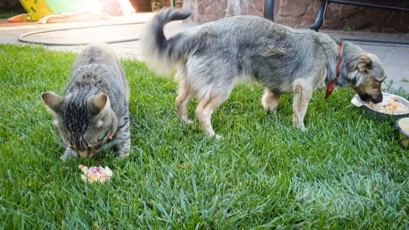 Closeupbild av den gulliga katten och hunden som äter mat från bunken på gräset på husträdgården royaltyfri fotografi