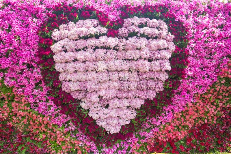 Closeupbild av den härliga blommaväggen fotografering för bildbyråer