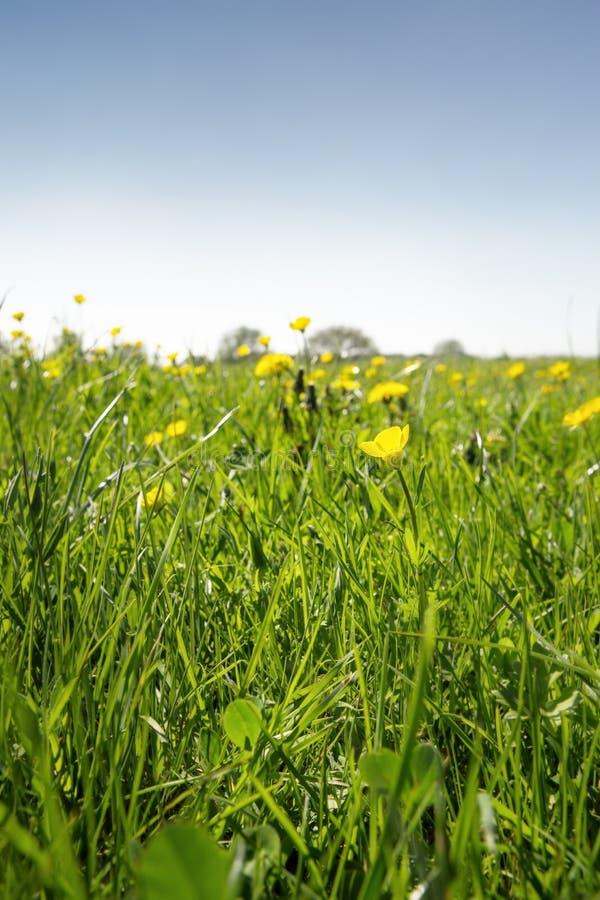 Closeupbild av gräs fotografering för bildbyråer