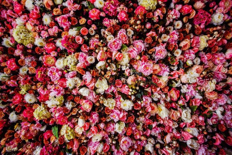 Closeupbild av härlig blommaväggbakgrund royaltyfri fotografi