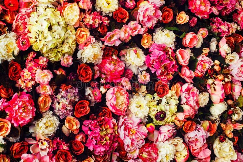 Closeupbild av härlig blommaväggbakgrund royaltyfri bild