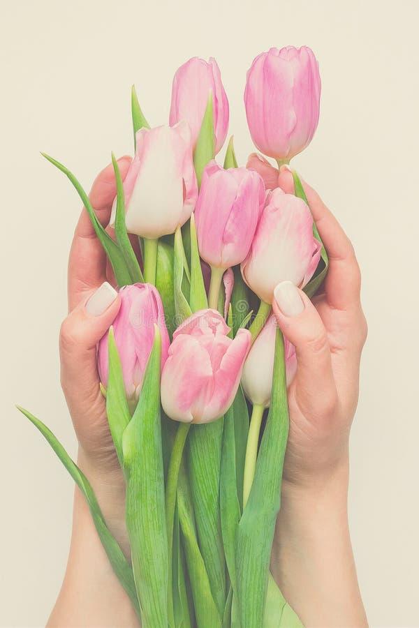 Closeupbukett av försiktiga rosa tulpan i kvinnlighänder på beige bakgrund Internationella kvinnors dag, dag för moder` s, mars 8 royaltyfri fotografi