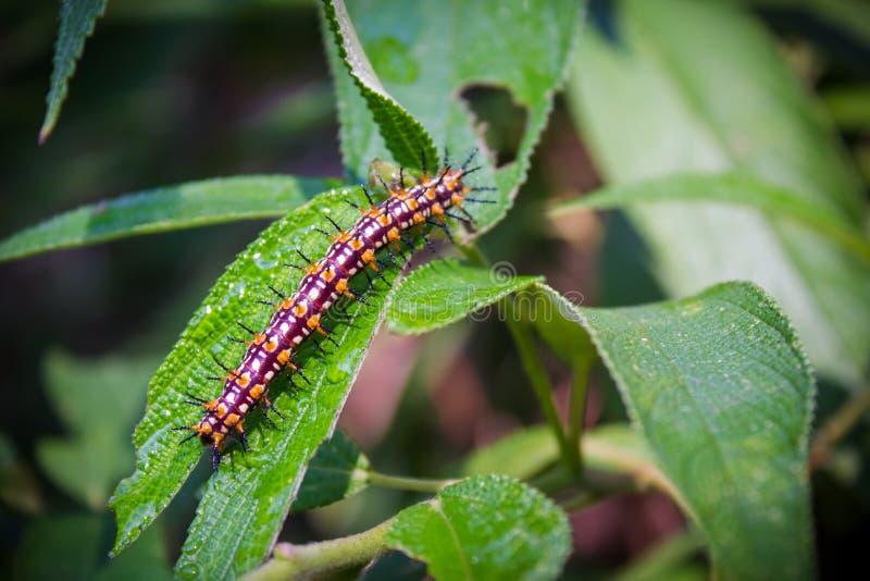 Closeupen av avmaskar matningar på den gröna naturen för bladmittskönhet arkivfoton