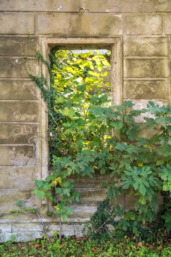 Closeupen av den förstörda gamla nedskärningen deserterade det tomma huset och löst arkivfoto