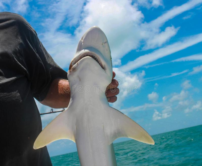 Closeupen av den lilla hajen rymde vid fiskaren på fiskebåten för det djupa havet royaltyfri foto
