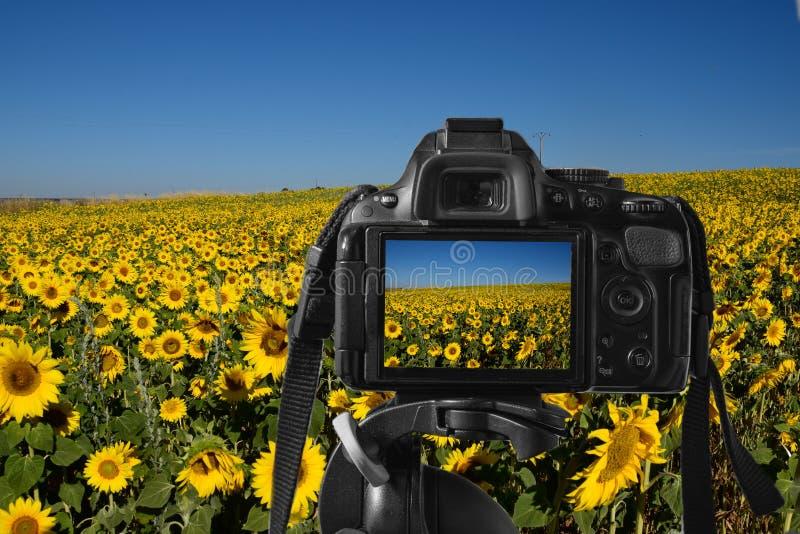 Closeupen av en digital kamera med ett färgrikt föreställer på levande-sikten arkivbilder