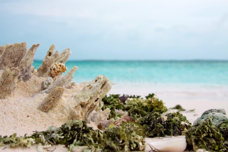 Closeupen av havsogräset, skal och havsgatubarnet på vit sand sätter på land och bandet av blått havsvatten arkivfoton