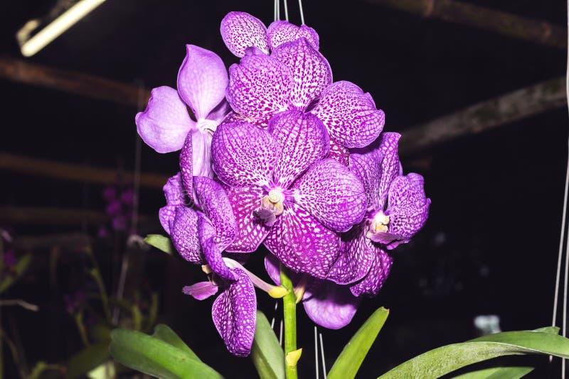 Closeupen av orkidér blommar i trädgård royaltyfri foto