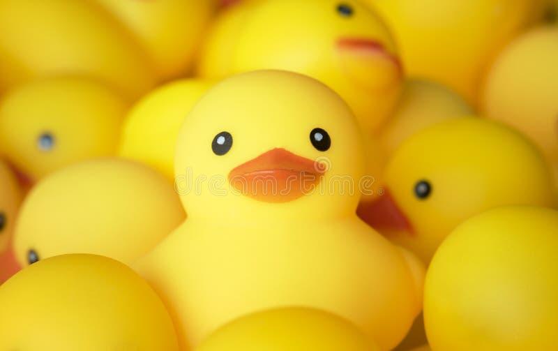 Closeupen av rubber duckies behandla som ett barn badet royaltyfri foto