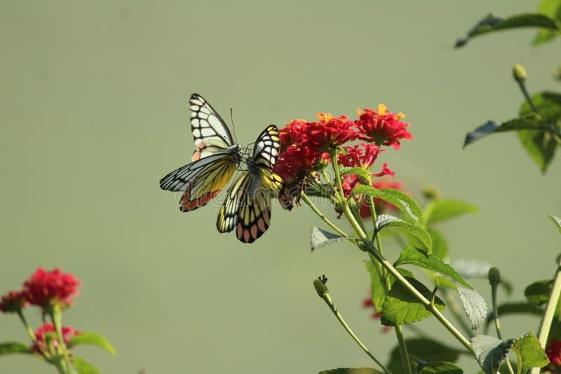 Closeupfjäril på blommatapeten arkivfoto