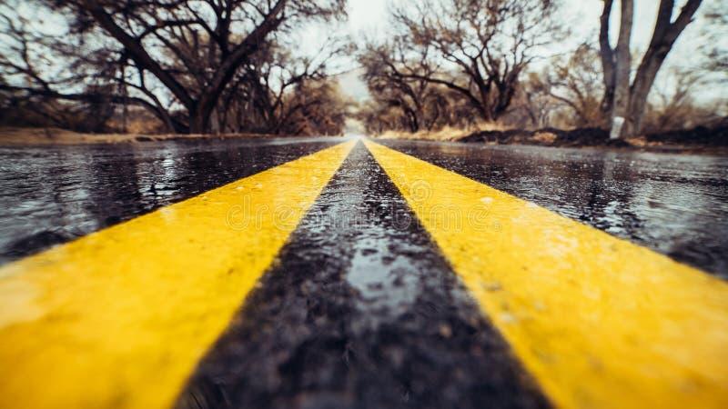 Closeupfoto av den gula markeringsgränden på den våta asfaltvägen i skog royaltyfri bild