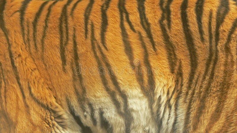 Closeupfoto av en tigertextur arkivfoton