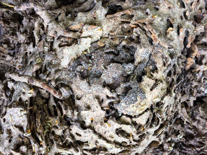 Closeupfoto av termitkolonin i naturen royaltyfri bild