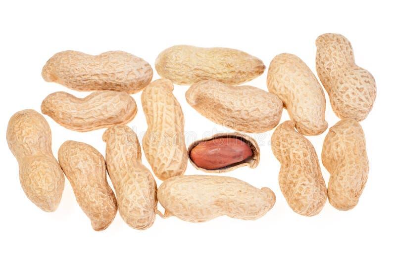 Closeupjordnötter i nötskal och skalade jordnötter på den vita backgrouen royaltyfri foto