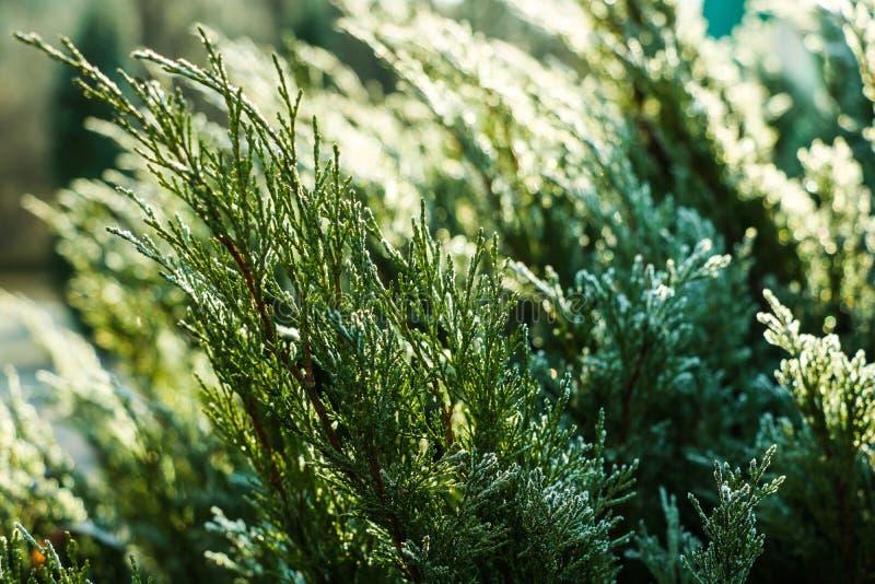 Closeupnaturdetalj av små frostade iskalla växter och torra, absolut djupfrysta sidor med rimfrosten som täcker jordningen med kn arkivfoto